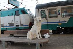 Momenti di vita ferroviaria, mostra fotografica a Carosino (TA), 20 maggio 2014, ore 11.00