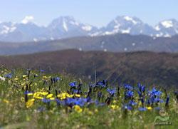 Trekking nel Parco Naturale delle Alpi Marittime